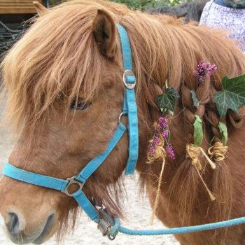 Unser ehemaliges Therapiepferd 'Neisti' - geschmückt von Kindern. Das Heilpädagogische Arbeiten mit Pferden umfasst neben dem Reiten für die Kinder und Jugendlichen auch alle anderen Tätigkeiten rund ums Pferd.