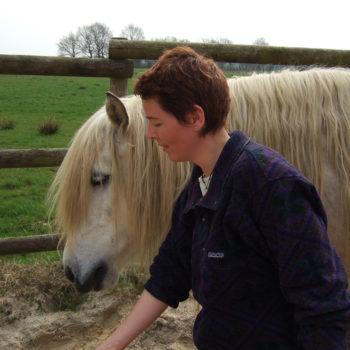 Coaching mit Pferden