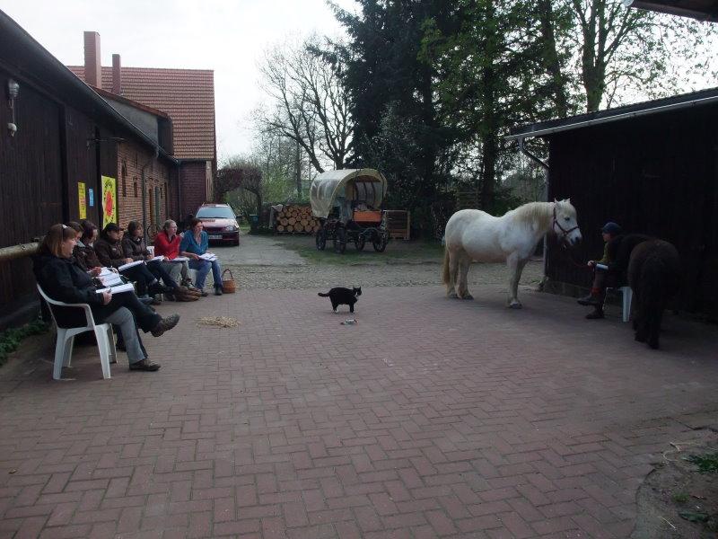Pferdebeurteilung als wesentlicher Bestandteil der Zusatzausbildung Heilpädagogisches Arbeiten mit Pferden / Heilpädagogisches Reiten.