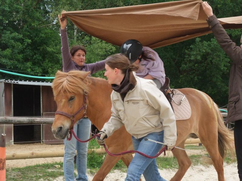 Praxiseinheit der Zusatzausbildung Heilpädagogisches Arbeiten mit Pferden / Heilpädagogisches Reiten